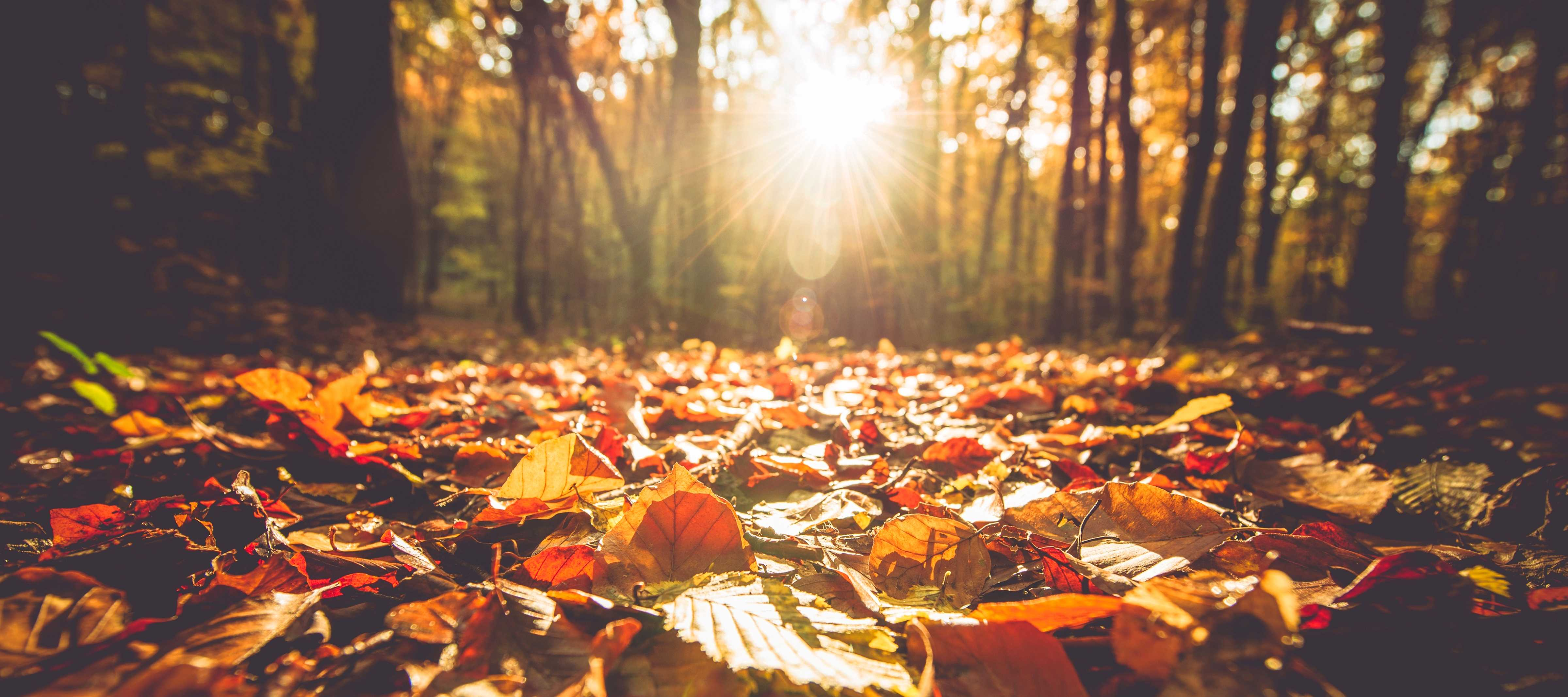 Experience Fall in the Ozarks - Lakefront Realty Hollister Missouri